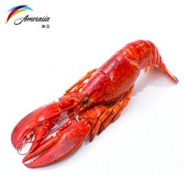 400-450g 原隻熟龍蝦